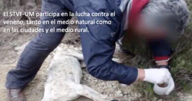 Veterinarios y Guardia Civil crean un portal para 'cazar' a quienes envenenan a perros.